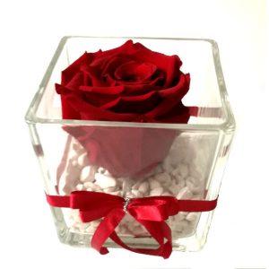 Трајна роза 1