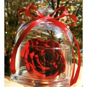 Трајна роза 3
