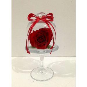 Трајна роза 5