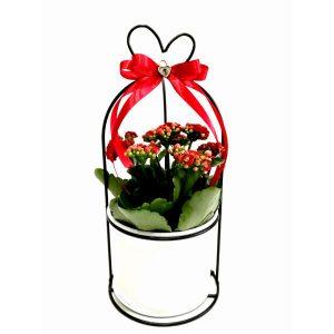 Саксиско цвеќе – Kalanchoe